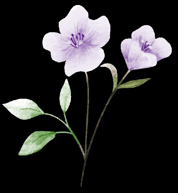 illustration d'une fleur de lin